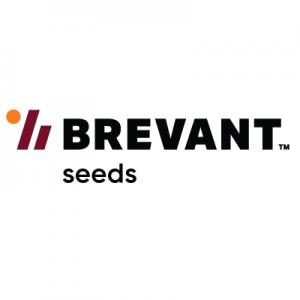 BREVANT seeds